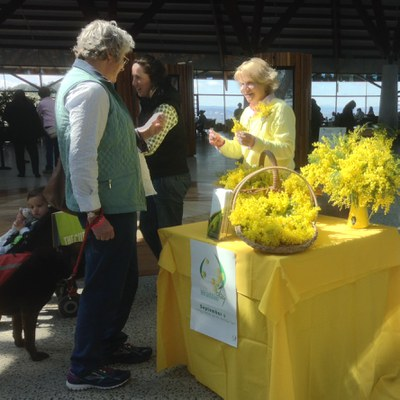 Wattle stall 2015 at National Arboretum