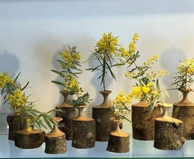 Wattle in wooden vases 2019