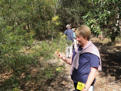 Indigiscapes wattle walk close-up 28 Aug 2021