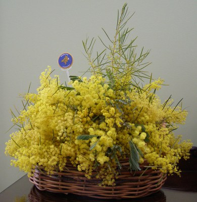Basket of Wattle by Dawn Searle